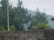 ある日、めずらしい野鳥が目の前に 現われました。 その名をヤツガシラというそうな… ニュースでも取り上げるくらい珍しい 渡り鳥です。