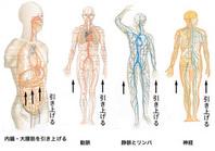 その為に、外出する事もおっくうになり、家に閉じこもる事が多くなります。更に状況が悪化して、寝たっきりになる方が多いようです。 特に大変なのは、長年の間に脳に行く血液の流れが悪くなり、血管がつまり、脳梗塞を起こして手足の動きが麻痺して歩けなくなったり、顔が曲がったり、言語 障害を起こして寝たっきりになったり、脳内の血流が悪くなる事により脳が萎縮して痴呆になり、家族にも多大な負担をかけることになります。