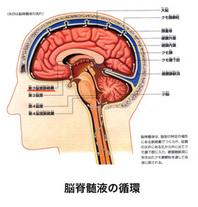 新しく開発した比嘉式脳梗塞予防矯正は、脳脊髄液の流れが停滞する事により、脳脊髄液が頭蓋骨内に充満してきます。 脳の組織、血管、神経を 圧迫 して脳梗塞 を引き起こすといった原因を取り除き、脳脊髄液の流れをスムーズにする事により、脳梗塞を起こしにくくする事ができます。 脳梗塞を起こした方の再発を起こしにくくする事を目的としています。 第 3 脳室にある脈絡叢が脳脊髄液を生産し脳内組織に供給して同時に脳内組織の老廃物を回収して排出します。 脈絡 叢 で生産されたイオン、ビタミン、有機栄養素、酸素を含んだ脳脊髄液の流れは、第 4 脳室外側口、正中口を通じてクモ膜下腔流れ、脳、脊髄、馬尾を回りクモ膜下腔を流れて最終的にクモ膜果粒で吸収され静脈に戻るといった本来のスムーズな流れにしていく事を目的とした矯正です。 50歳を越して、頭が大きく首が太くなったと感じている方、頭痛、ひどい肩こり、思考能力が低下したと感じている方、身内に脳梗塞を起こしている方がいらっしゃる方は、電話予約の上お気軽に無料相談を受けてください。 同時に病院で診察を受ける事をお進めします。