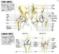 生まれつき股関節の大腿骨頭が小さくて、股関節の動きが悪い方、股関節が動かず、手術の必要な方、変形性膝関節症の為に歩行困難な方、血行障害の為に歩行困難な方の専門治療です。  勝どき東洋医学専門院の治療は、オリジナル骨格調整術と、股関節・膝関節内のつまりや筋肉・靱帯・神経などのつまりや炎症を取り、神経や血液の流れをスムーズにする事により、歩けるようになります。歩行困難で悩まれている方、あきらめずに一度、無料相談を御利用下さい。