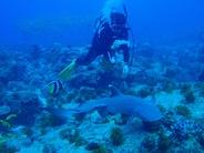 那覇近海、チービシの海でのご案内となります。   一日で沢山潜りたい、カメラでじっくり被写体を撮りたい、できるだけ水中に長くいたい方オススメです。     ▪️所要時間  9時間    ▪️ダイビング本数  4本    ▪️エリア  那覇近海、チービシ礁    ▪️料金   27000円