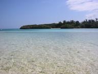 沖縄県石垣島でアロマ商品を製造していますが、近年石垣島では【サンゴの死滅】が問題視されています。これは、沖縄県の赤土が台風やゲリラ豪雨により海に流され、そのままサンゴを覆い被すことで、サンゴの呼吸を止めてしまうことが原因です。 私たちは島の農家と協力し、赤土流出を防ぐ【月桃(ゲットウ)】を畑の周囲に植えサンゴ保護に寄与しています。 植えた月桃からは精油を抽出し商品化、またその精油を配合したアロマ化粧品の開発を行っており、商品を使用する方が間接的に環境保護に携わることができます。