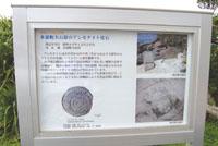 県指定の天然記念物のアンモナイト化石は「夕日の広場」近くの浜にある。石の中からアンモナイトを探してみよう。