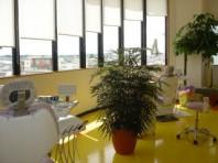 診療室です。窓が大きく、天井が高いため明るい雰囲気になっております。