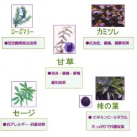 Herb Color   ~香草カラー~