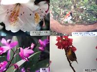 動植物 アマミセイシカ(写真左上) アカヒゲ(写真右上) ムラサキラン(写真左下) メジロ(写真右下)  行事 海開き(旧暦3月3日)