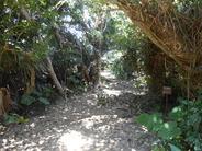<b>フボー(クボー)御嶽</b> 沖縄の七大御嶽といわれている最高の聖地である。昔から男子禁制の御嶽であり、多くの祭祀が執り行われている。現在は男女を問わず御嶽は立ち入り禁止となっていて、入口付近の大きな石のところで我々は感謝を込めて拝礼した。