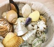 色々な種類の素敵な貝殻が沢山!!