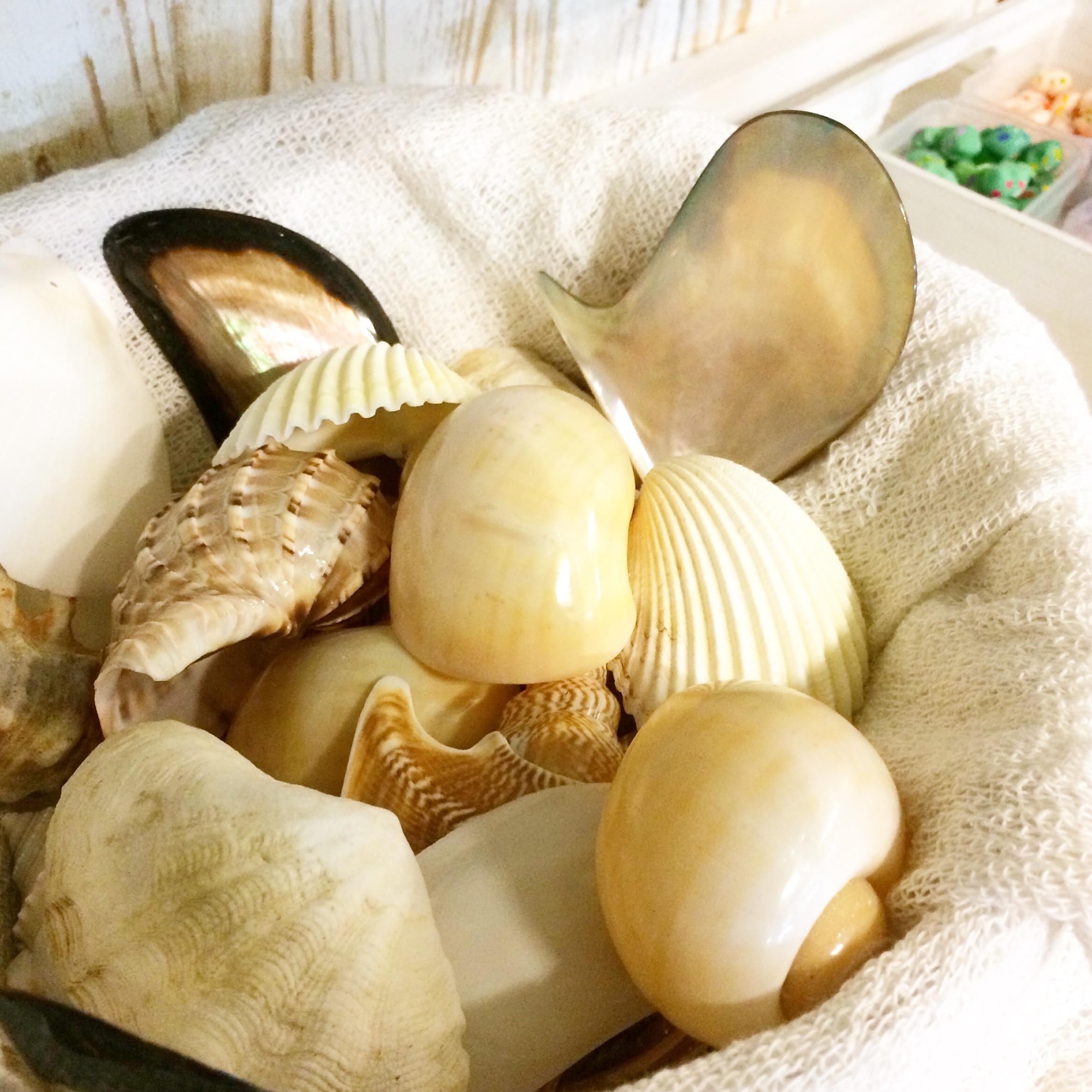 貝のデコ盛り土台も、沢山ありますので選ぶのが楽しい♪