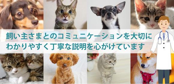 沖縄県那覇市国場・与儀の動物病院です。 飼主様とのコミュニケーションを大切にわかりやすく丁寧な説明を心がけています。 健康維持や健康診断、各種予防、病気やケガなど動物の健康に関することはなんでもお気軽にご相談ください。