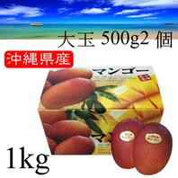 一玉 約500gの2個入 【優品 大玉2玉 1kg】