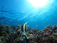 午前中潜って午後から観光したい・・・飛行機の到着が遅いけど潜りたい!!  時間を有効に使いたい方オススメです。  午前か午後お選びいただけます。  ▪️所要時間 時間  ▪️ダイビング本数 2本  ▪️エリア 那覇近海、チービシ礁  ▪️料金 12500円