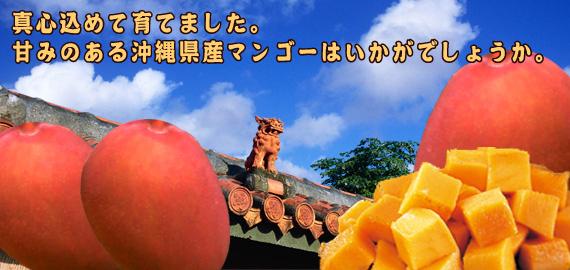 沖縄本東南部糸満市に伊敷畑の農園があり、潮風や陽のあたる場所に立地しています。この大地に育った野菜や果実を親子2代で育てた味をみなさまのご家庭に。
