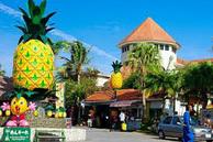 名護市にあるパイナップルのテーマパーク。パインの試食やワインなどもお試しできる 楽しい施設です。