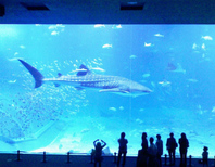 人気No.1の観光スポットです。 美ら海水族館は車で約40分!