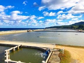 沖縄・久米島の大自然で育まれた車海老