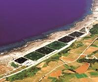 久米島エビ養殖場の所在地