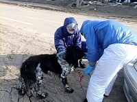 福島原発で被災した犬を救助し支援中です