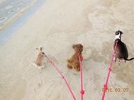 わんちゃん保育園ラ・レイアはサンセットビーチまで徒歩2分 みんなビーチ大好き ヒャッホ~イ♪