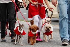 1頭でも大切な命が、人間の都合で哀しい目に合わないようにという祈りを胸に みんなで歩きました。全国でこのようなことがどんどん行われたらと思います。全国に広まれ!!! 『犬もネコも心ある動物 今ある命を大切に』パレード!