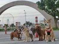 近くに球場や公園もあります。 保育園組(週3回)が球場前で北谷名物の観覧車をバックに決めてくれました。 保育園に来る前はみんな知らない同士 中には犬嫌いの子もいましたが・・・ 今ではみんな揃っていい笑顔! 幸せです!! みなさんありがとうございます。