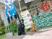 """ラ・レイア前にぜんざいかき氷の出店 読谷村座喜味城前の老舗""""鶴亀堂""""さんのぜんざい とってもおいしかったですよ!  看板犬してくれたのはラ・レイア常連さんの元気君とクド君 さすがです! ママと毎週『沖縄家庭犬訓練所』に通っているんですよ わんちゃんと快適に暮らす為とても大切なことです。 みなさんも訓練しましょ~♪"""