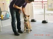 ドッグライフプランナーズ顧問 ドッグライフプランナー協会 会長岸良一先生を囲んでゆったり90分  もちろんわんちゃんも一緒 今回は18ワンズ16人の飼い主様にご参加いただきました。 <参加犬種>チワワ・ダックス・トイプー・イタグレ・ラブラドール・柴犬・柴系MIX・マルチーズMIX・コーギーMIX ご参加いただきました皆様本当にありがとうございました。